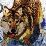 Wolf-Heade-proc-600